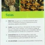 Setas 2